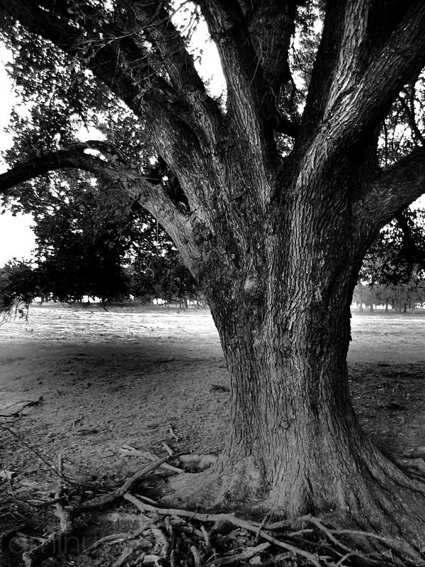 Old Tree Detail