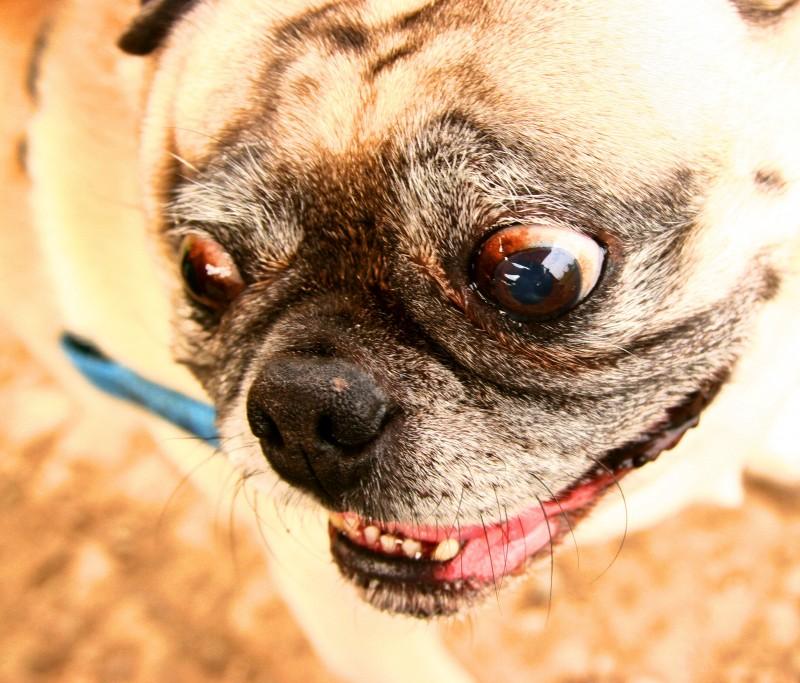 Pug-Eyed