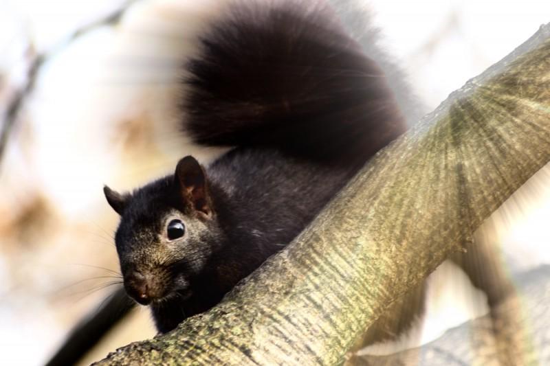 Da Squirrel