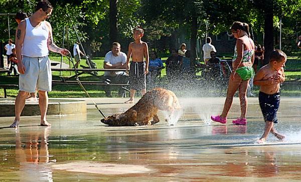Dog-gone it I miss the Summer