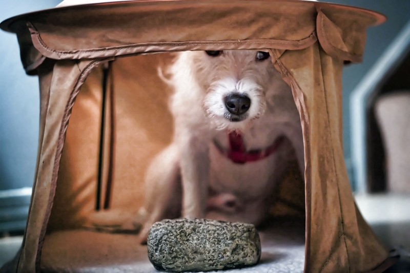 My Dog in his Arabian Night Tent