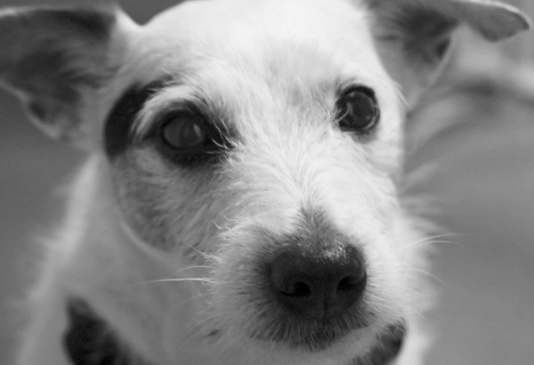 My Dog, portrait