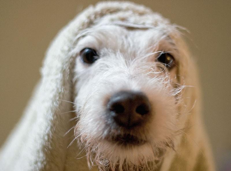 Casper after his Bath