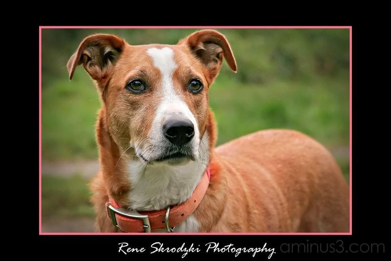 Doggie Portrait 2
