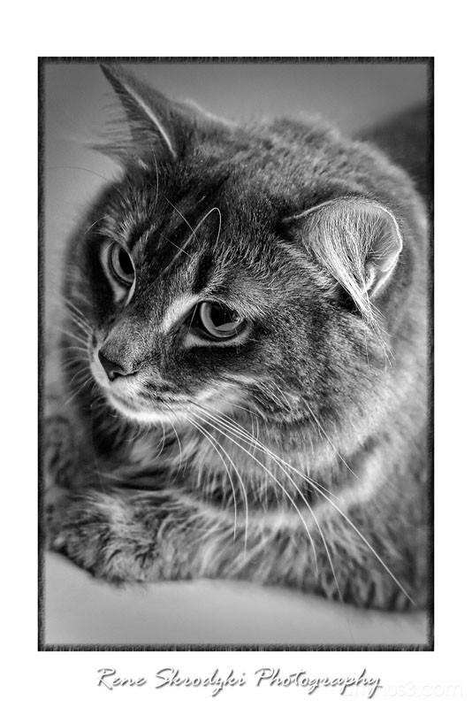 Pretty Kitty B/W