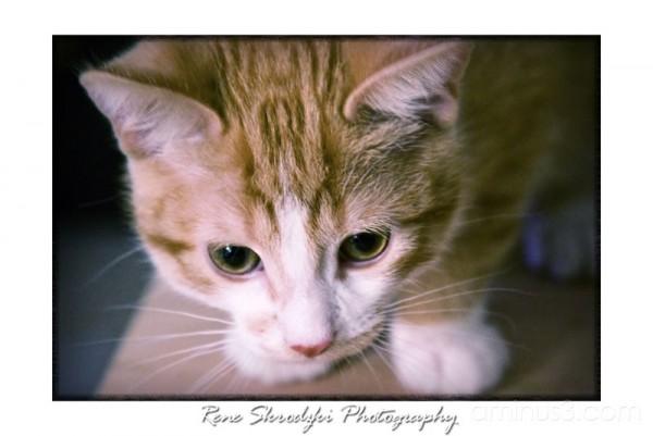 Harley the Kitten