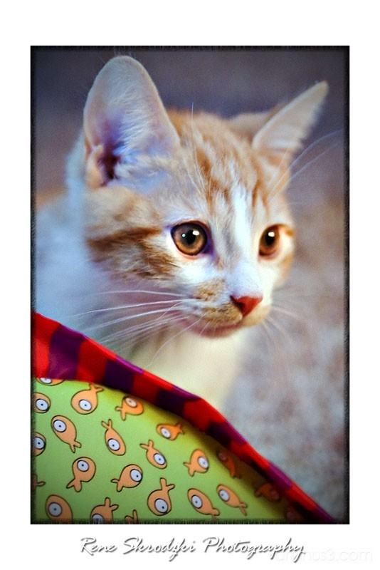 Harley the Kitten 2