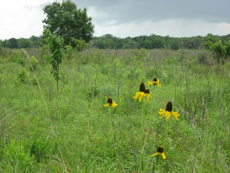 Armand Bayou Flower Prairie