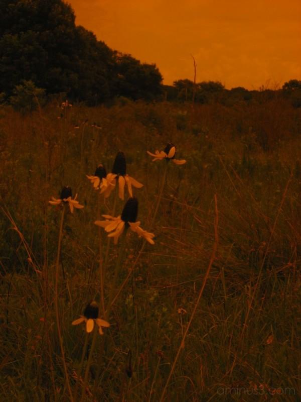 Armand Bayou Flower