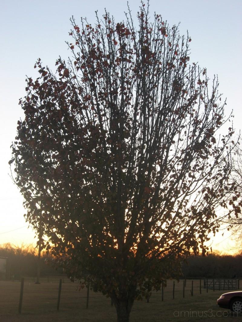 A tree at sundown