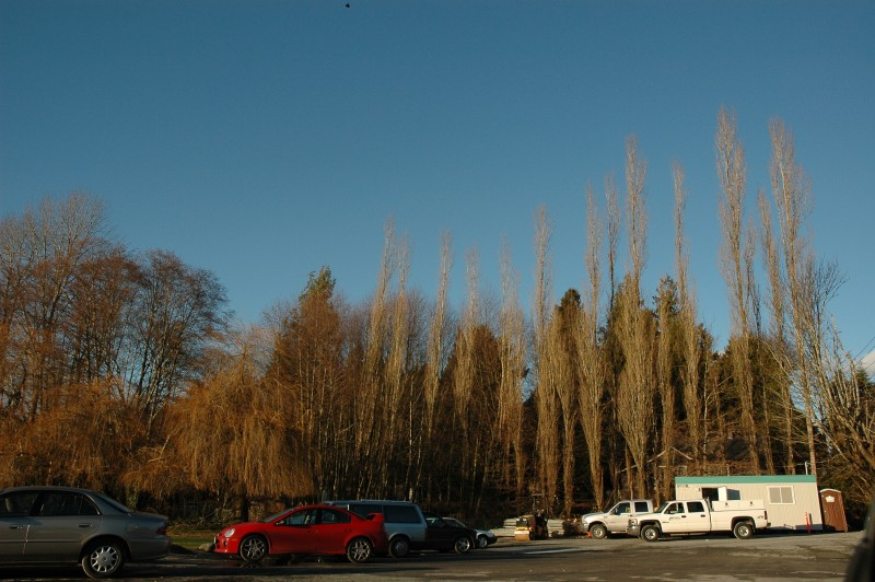 dear lake park, Burnaby