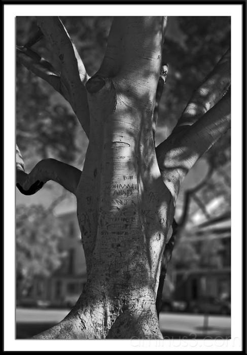 Message Tree