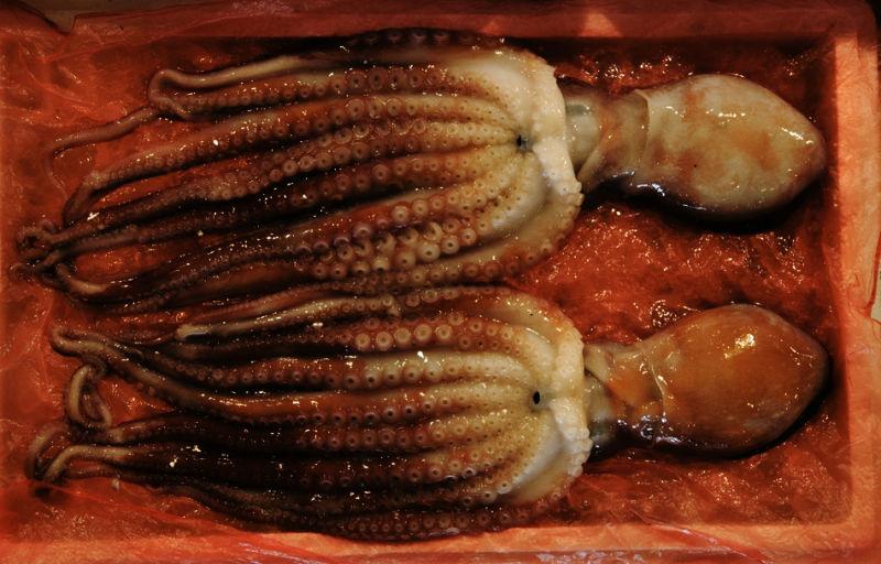 Octopus, Noryangjin Fish Market, Seoul Korea