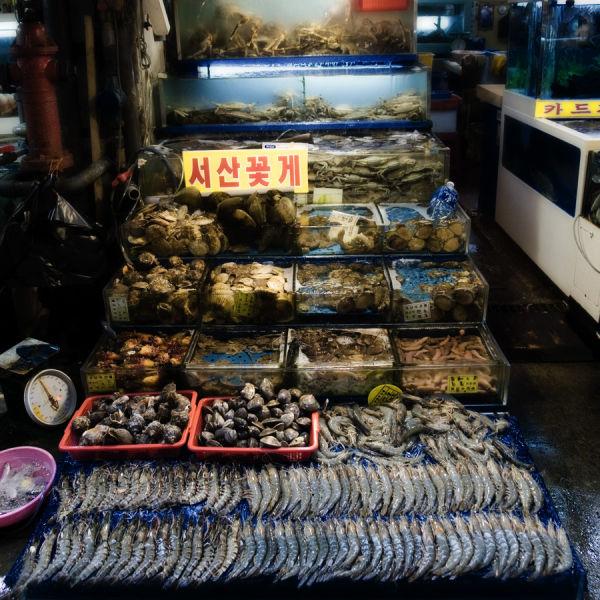 Noryangjin Fish Market, Seoul, korea, aidan hammon