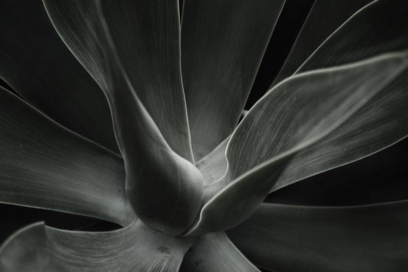 cactus abstract, botanical gardens