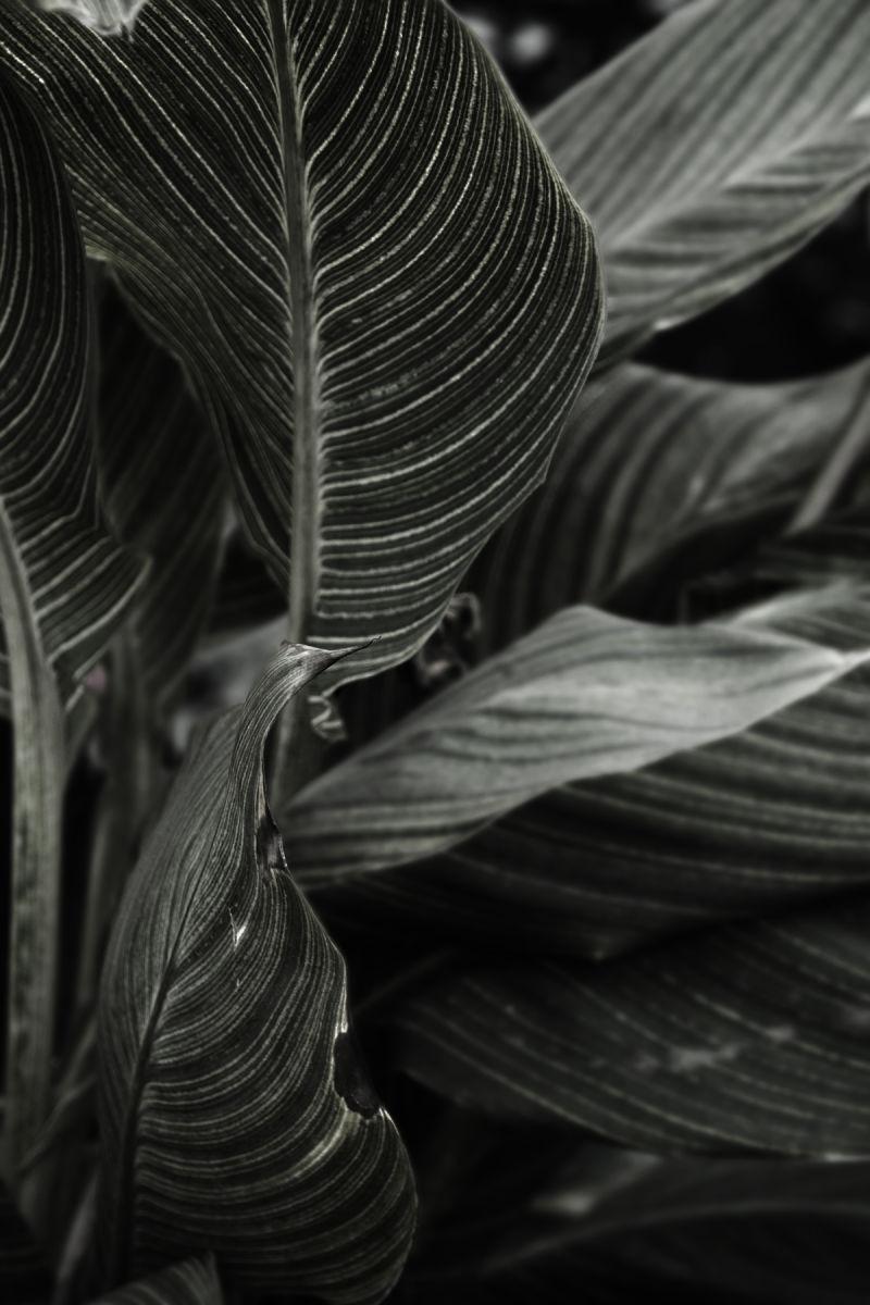 aidan hammond plant cheju jeju korea