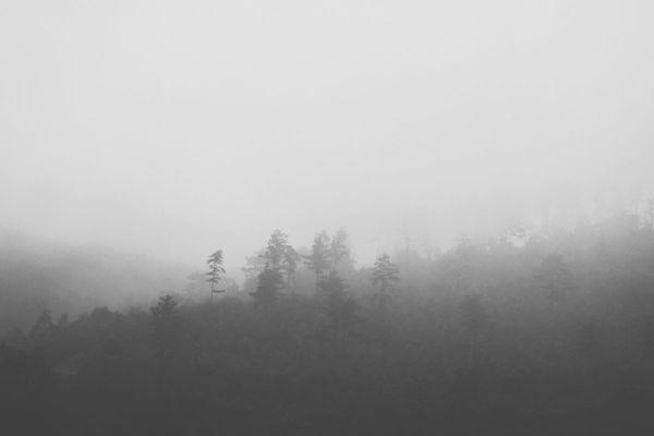 Taean Mist