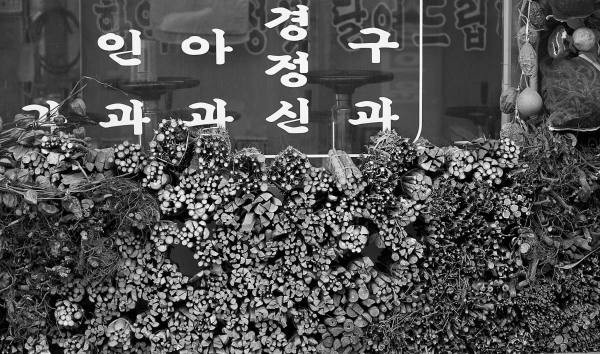 Oriental medicine market in Seoul