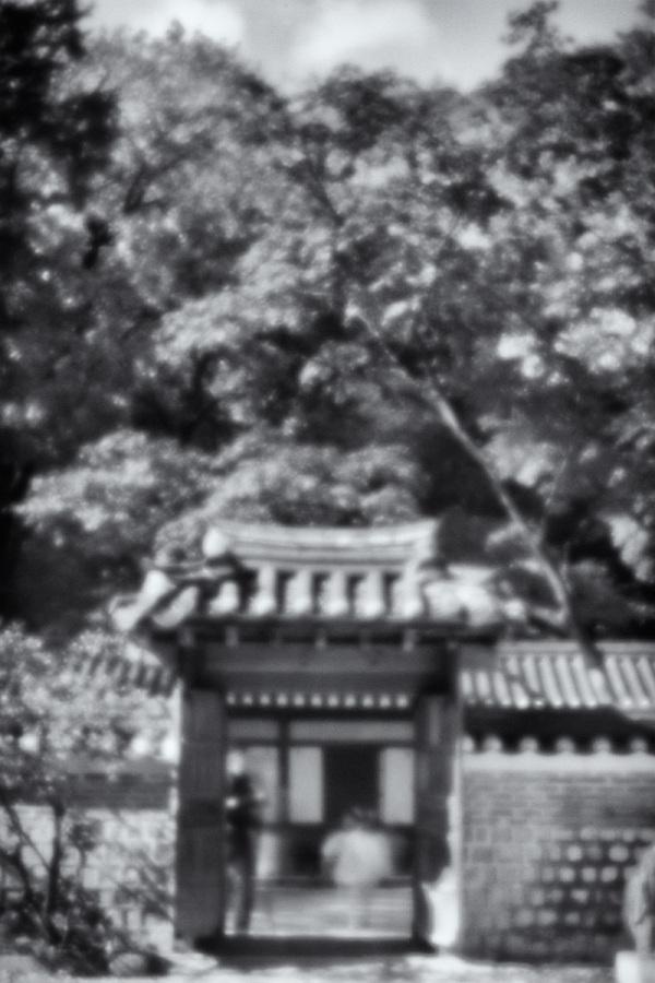 secret garden through a pinhole lens