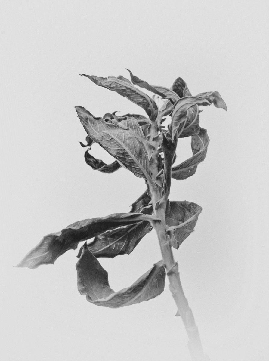 winter flower, version 2