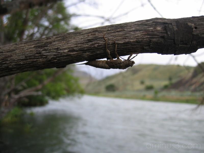 Deschutes River May 06