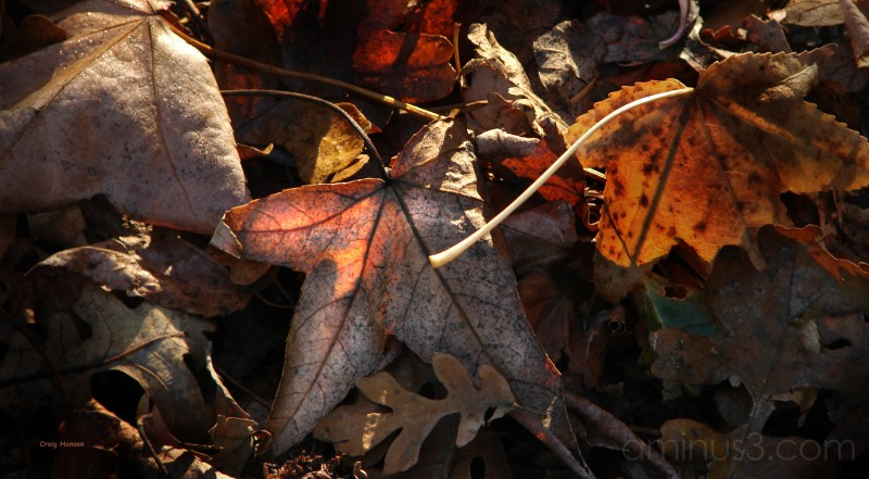 Last Leaf Image  -2006