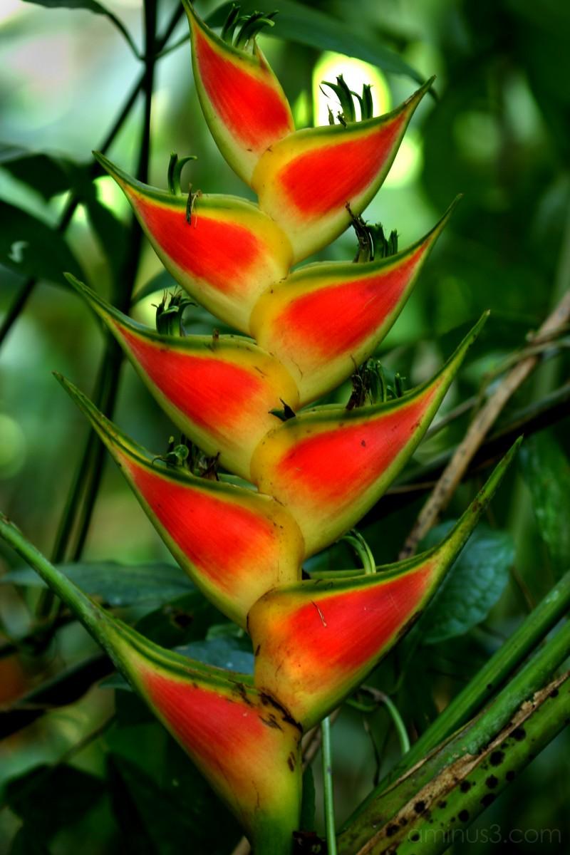 Jungle Plant - 2006