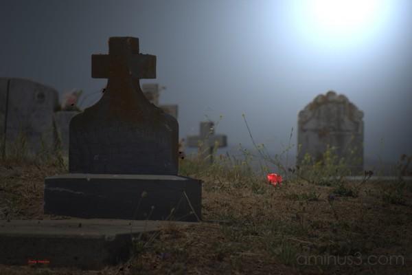 Moonlit graveyard