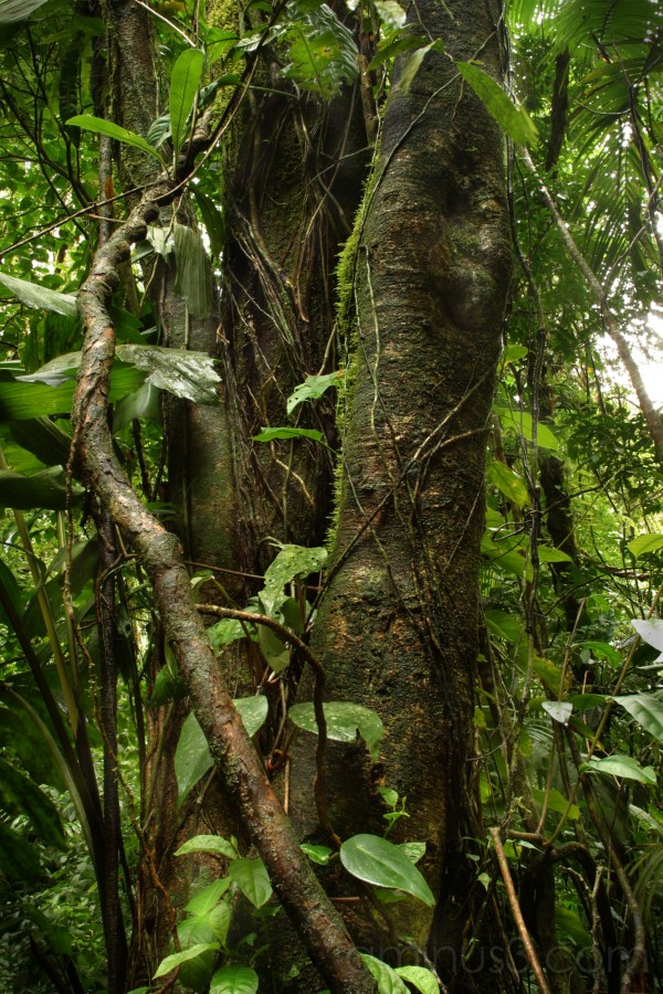 Arenal Rain Forest - Costa Rica - 2006