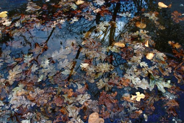 Reflection Puddle