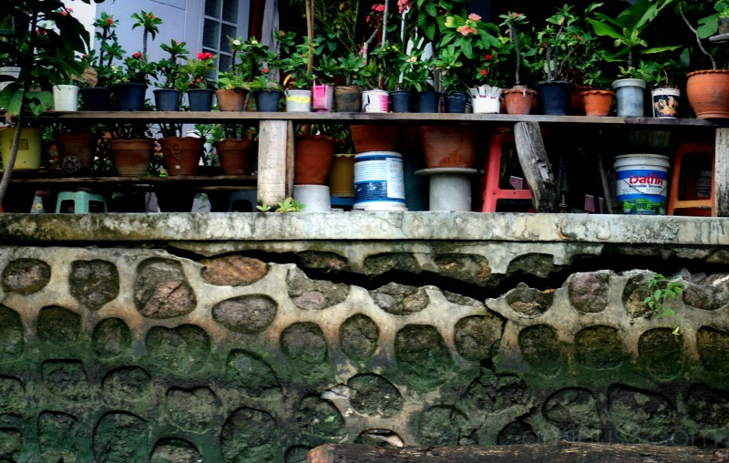 Potted Plants along the Klong,  Klong III