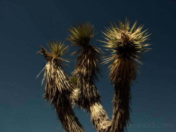 Desert Images - 2007