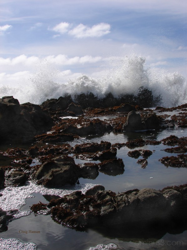 The Tidepools of Pescadero II