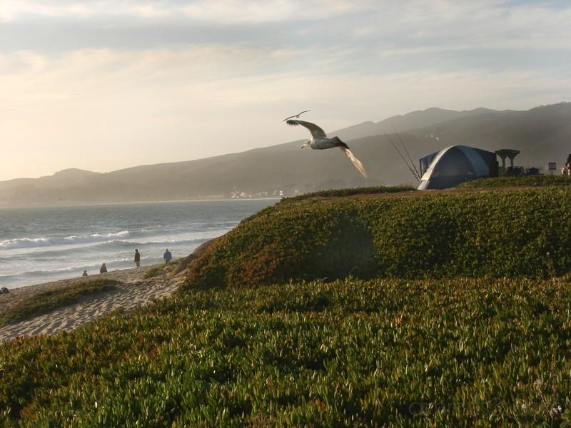 Camping - Half Moon Bay