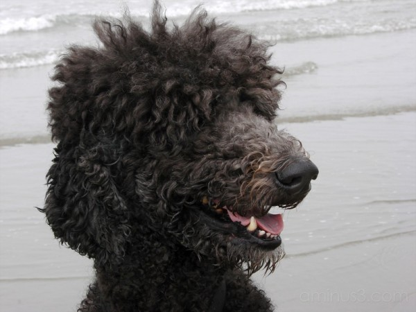MaX at Dillon Beach