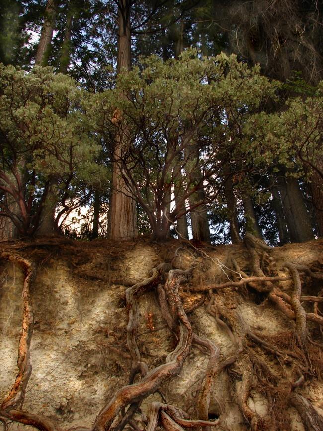 Roots III