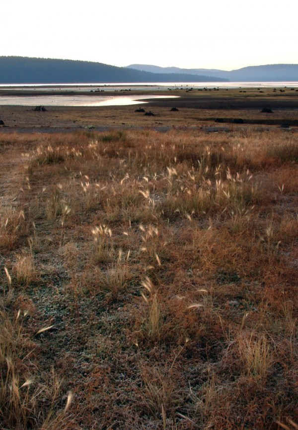 Wetlands Reclaiming Ground From Lake Almanor