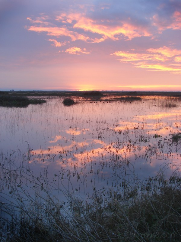 Sunrise - Yolo Bypass Wildlife Refuge VII