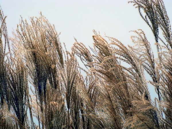 Winter Grasses with Impending Storm