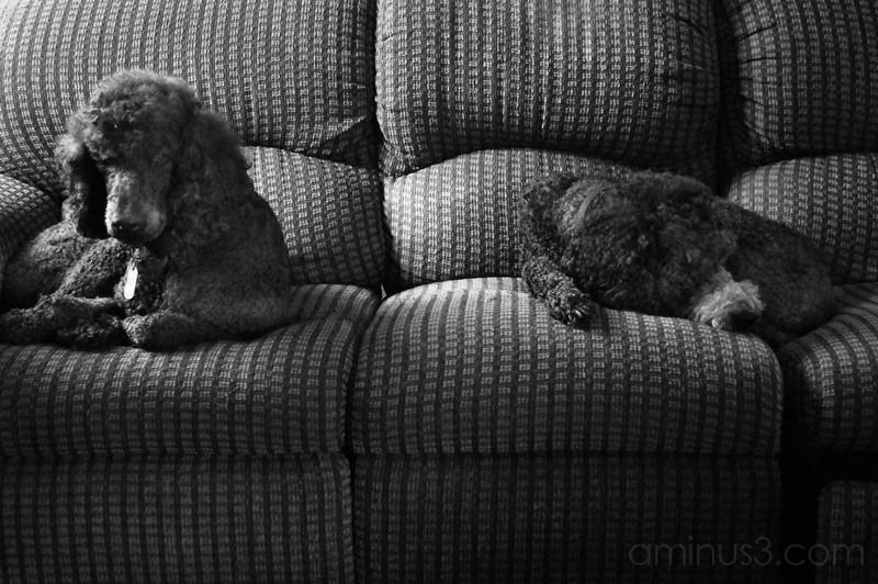 Sophia (left) Max (right)