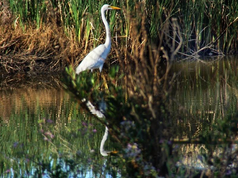 The Marsh  III