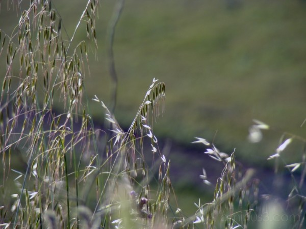 The Grasslands II