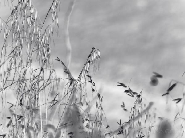 The Grasslands III