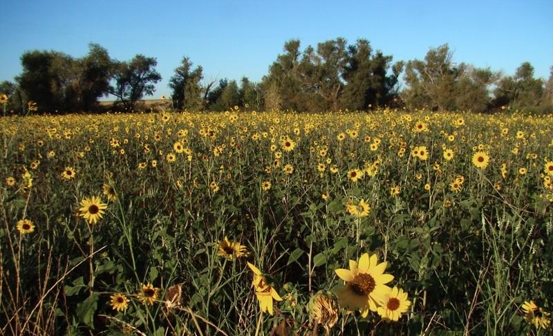 Yolo Wildlife Area III