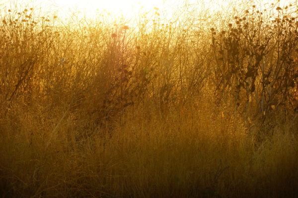 Thicket at Sunrise