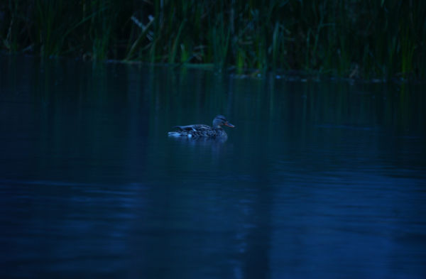 Hat Creek Duck Call