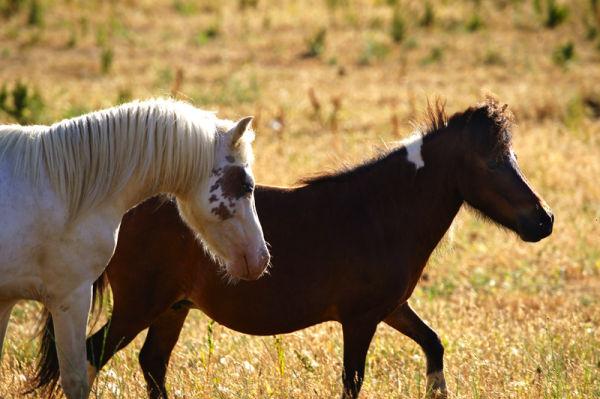 Ghost Ponies