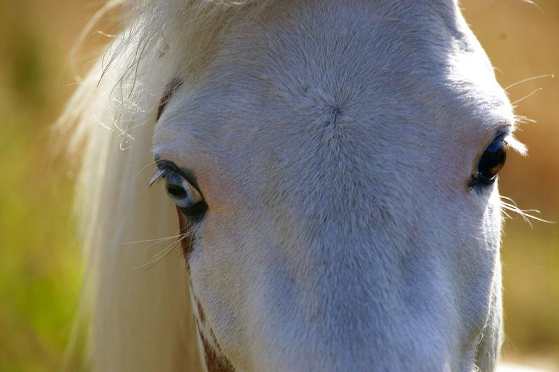 Ghost Ponies II