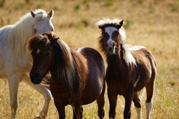 Ghost Ponies III