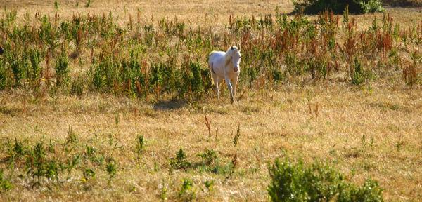 Ghost Ponies IV